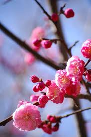 Douceur du printemps – aux confins des choses, la couleur du ciel. Iida Dakotsu