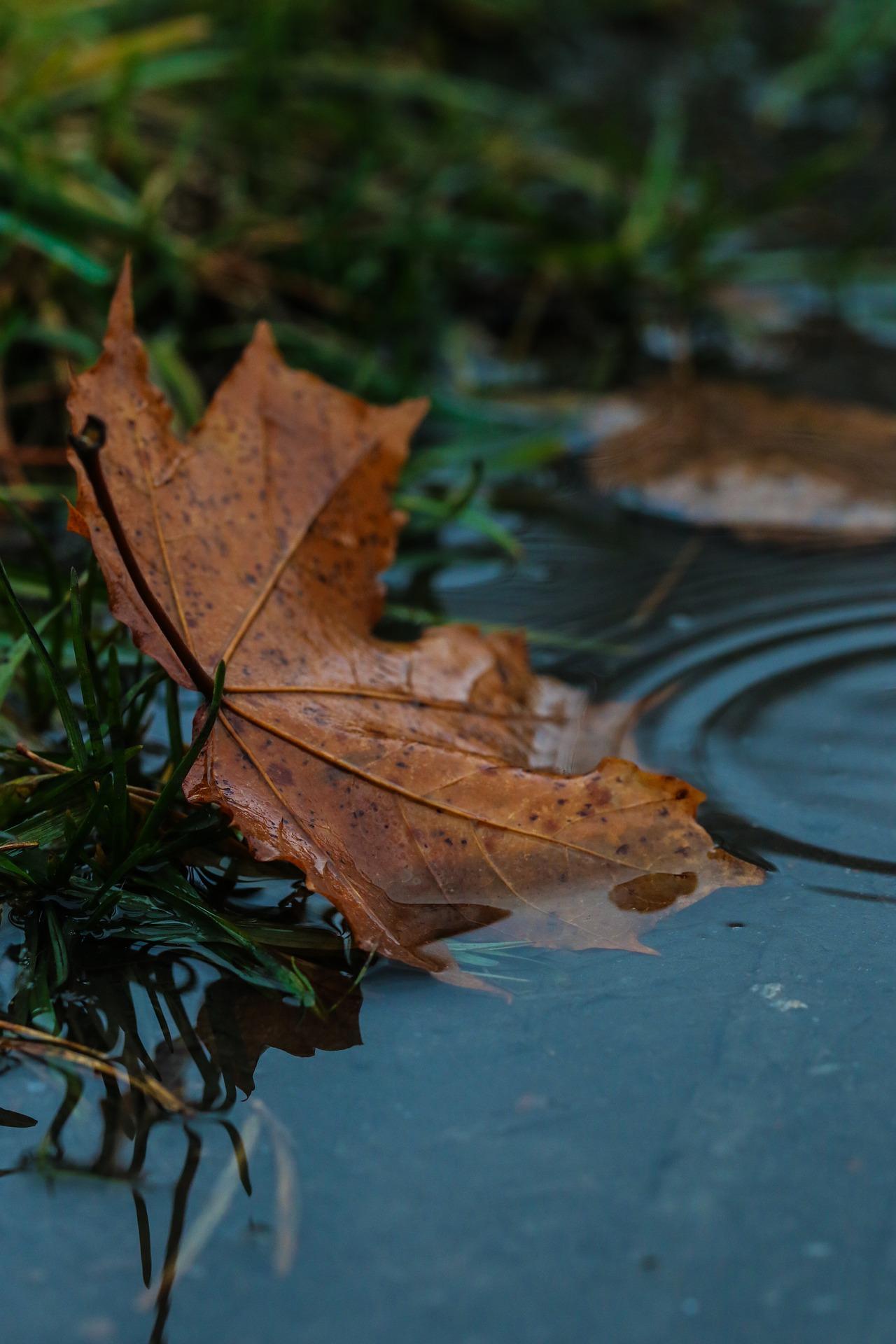Tout l'automne à la fin n'est plus qu'une tisane froide. Francis Ponge