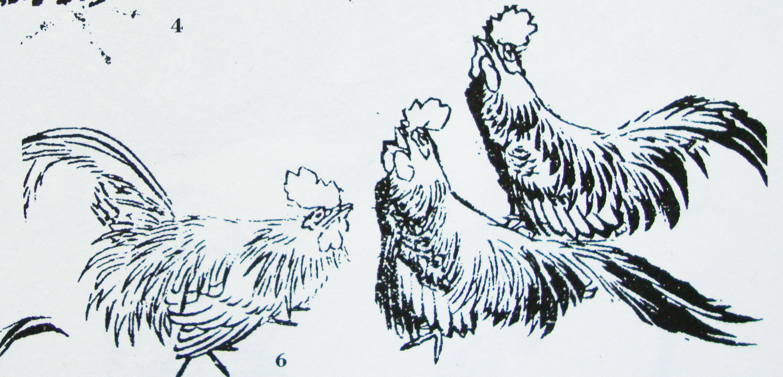 Croquis d'oiseaux, du paon à la poule. Atelier dessin ce dimanche 18 août 2019 – 14h30 – Parc des animaux du Bois de la Bâtie.