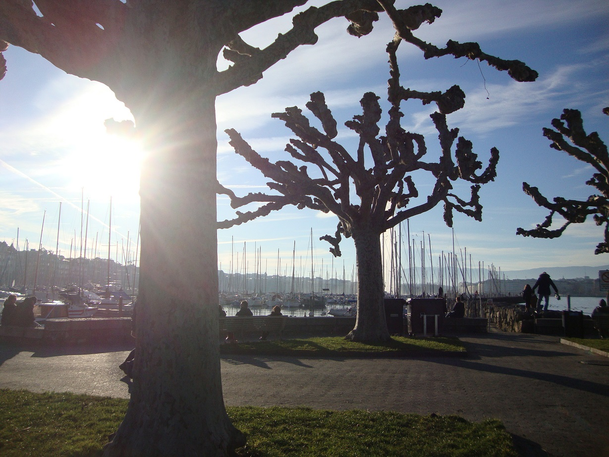 12 janvier 2020 – Haiku&Cie – le soleil d'hiver pour un instant m'éblouit, le vol des canards